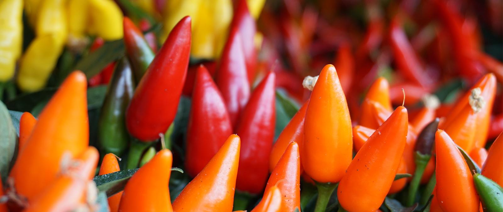 Leuchtende Farben - Herbstpflanzen für den Blumenkasten