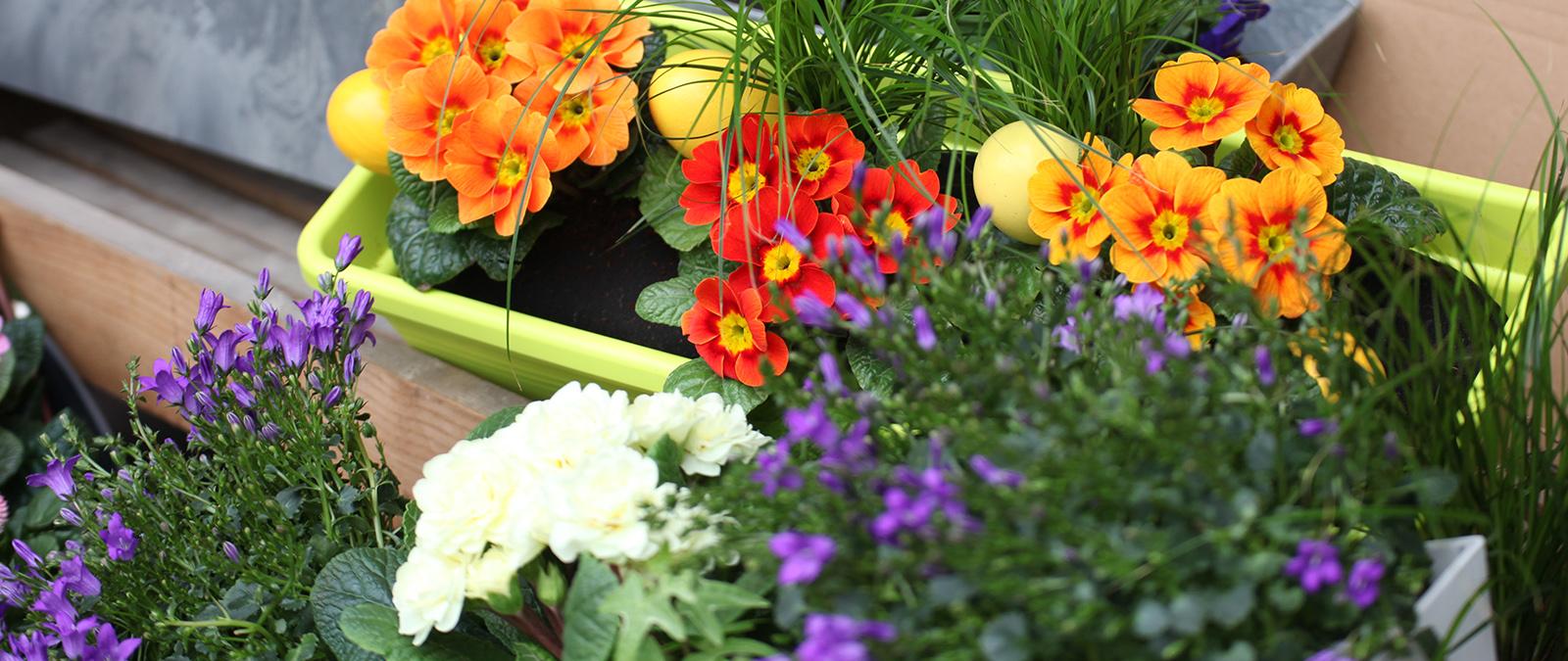 Frühjahrsblüher richtig pflanzen - so haben Sie lange Freude!