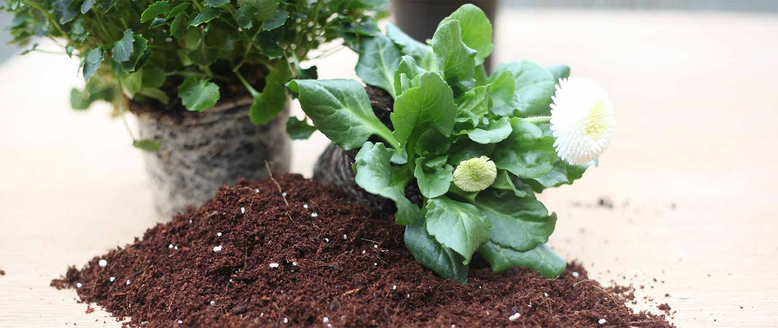 Kokoserde - Die nachhaltige Alternative zur Blumenerde mit Torfanteil