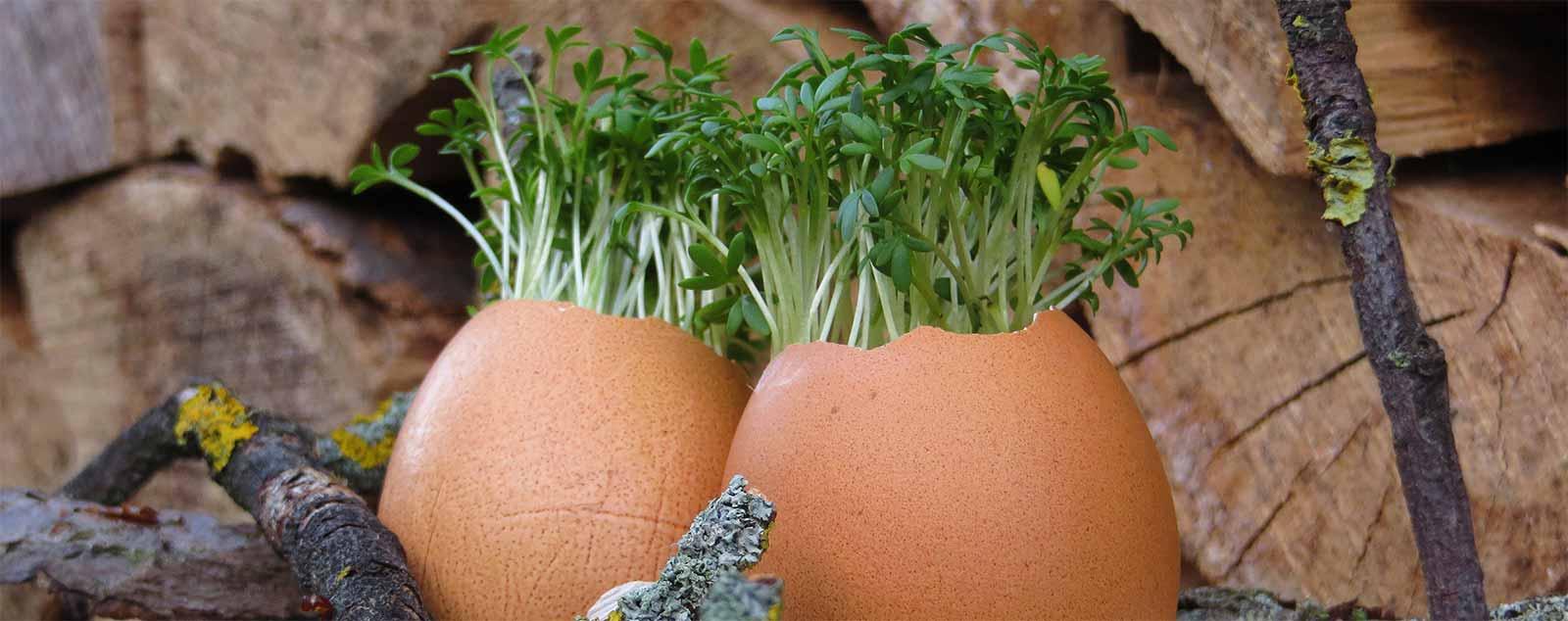 dekoration-fuer-den-festlich-geschmueckten-ostertisch-kresse-eier-selbstgemacht
