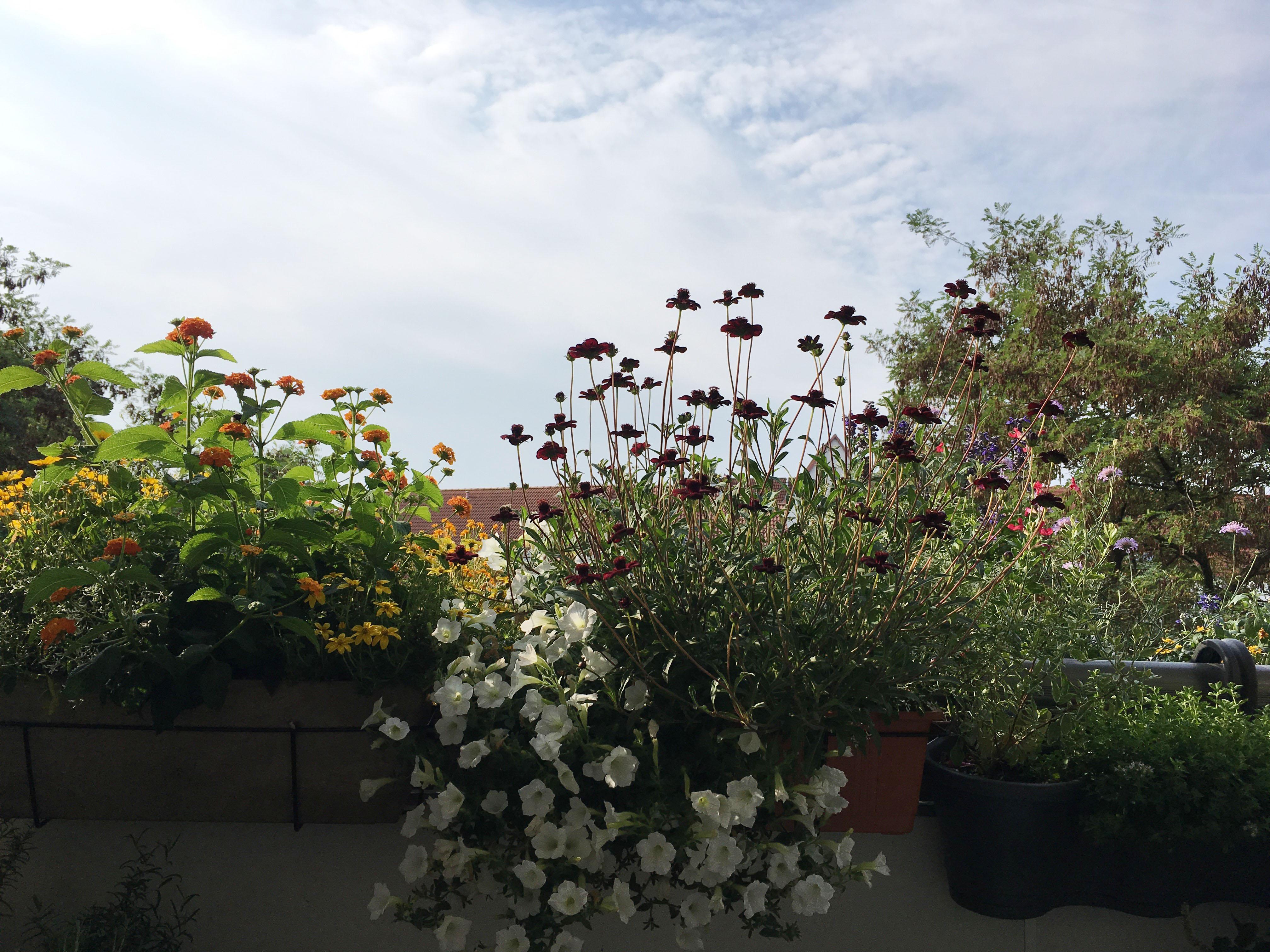 den-blumenkasten-mit-bienenfreundlichen-balkonblumen-bepflanzen