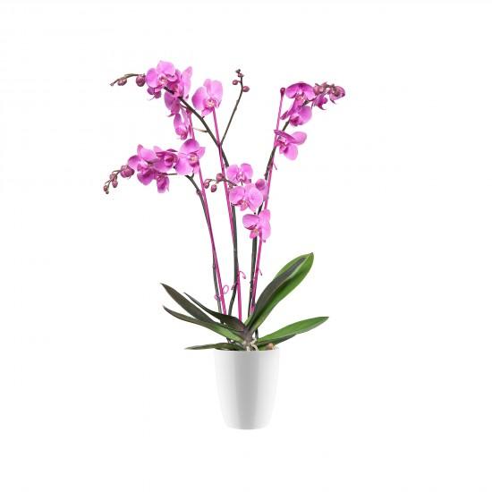 elho_orchideentopf_brussels_diamond_hoch_weiss_12cm_orchideenpflanze