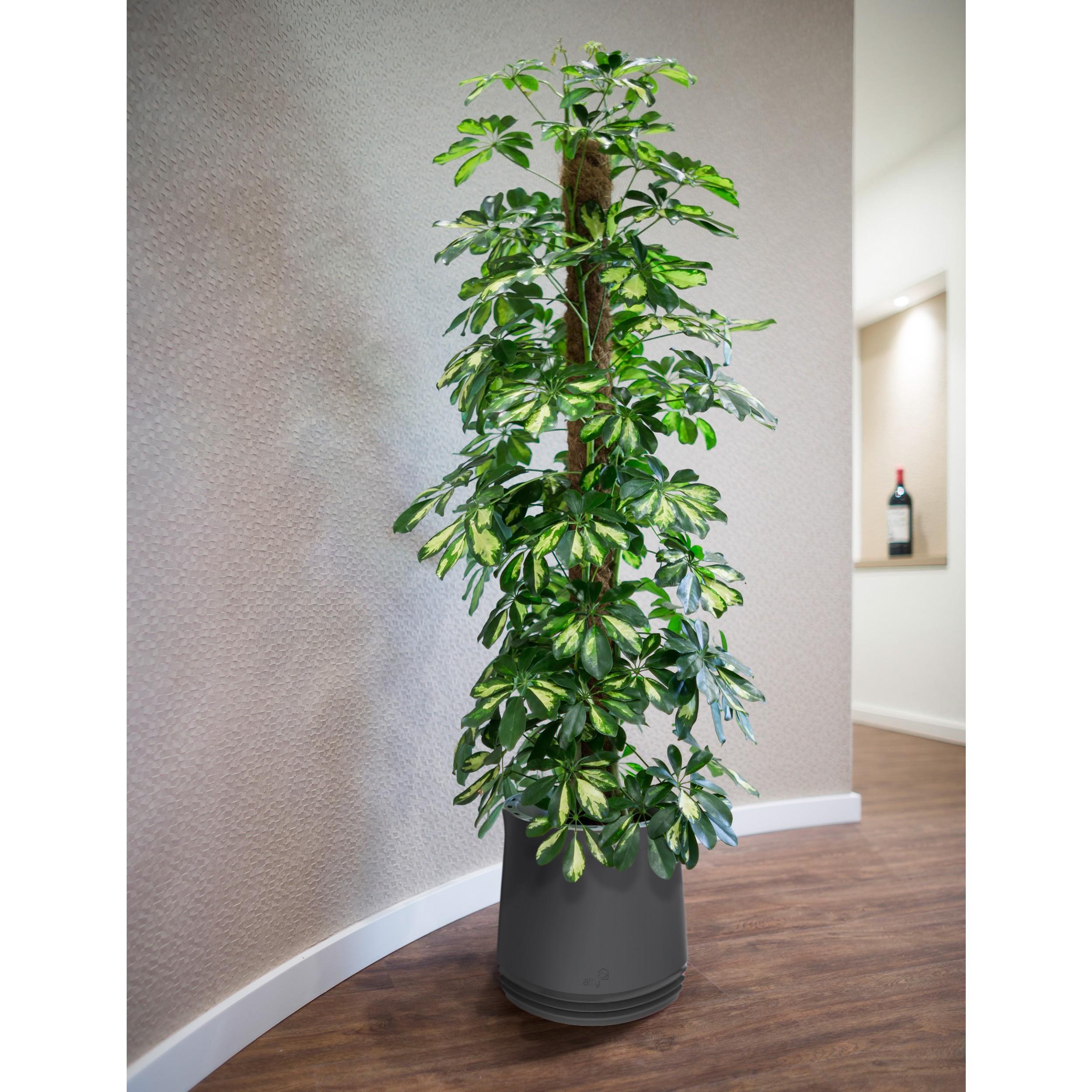 Blumentopf airy pflanztopf bertopf zimmerpflanzen luftreinigungssystem pflanzen ebay - Zimmerpflanzen groay ...