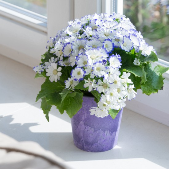 artstone_blumentopf_claire_ila_zimmerpflanze
