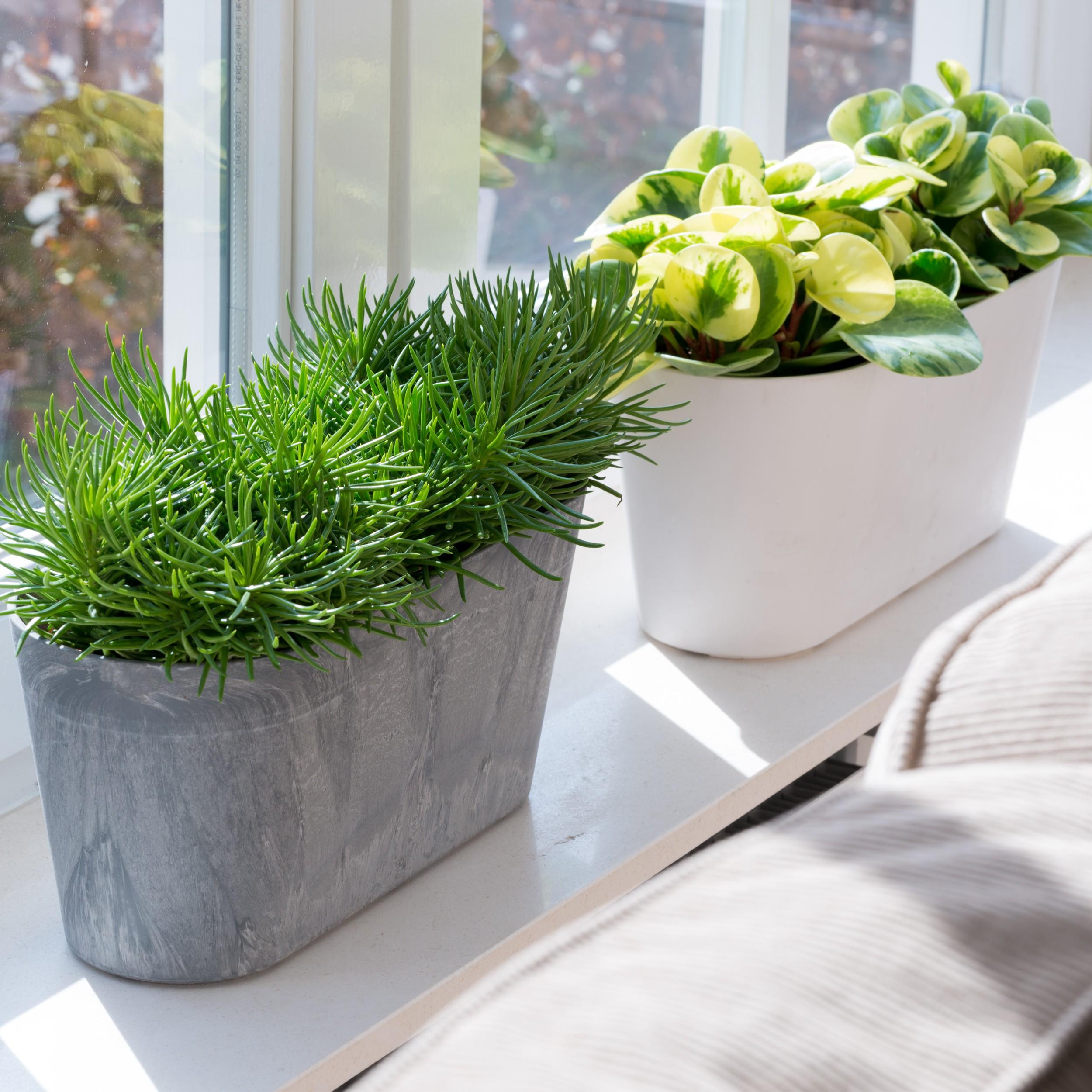 artstone balkonkasten claire blumenkasten pflanzkasten. Black Bedroom Furniture Sets. Home Design Ideas