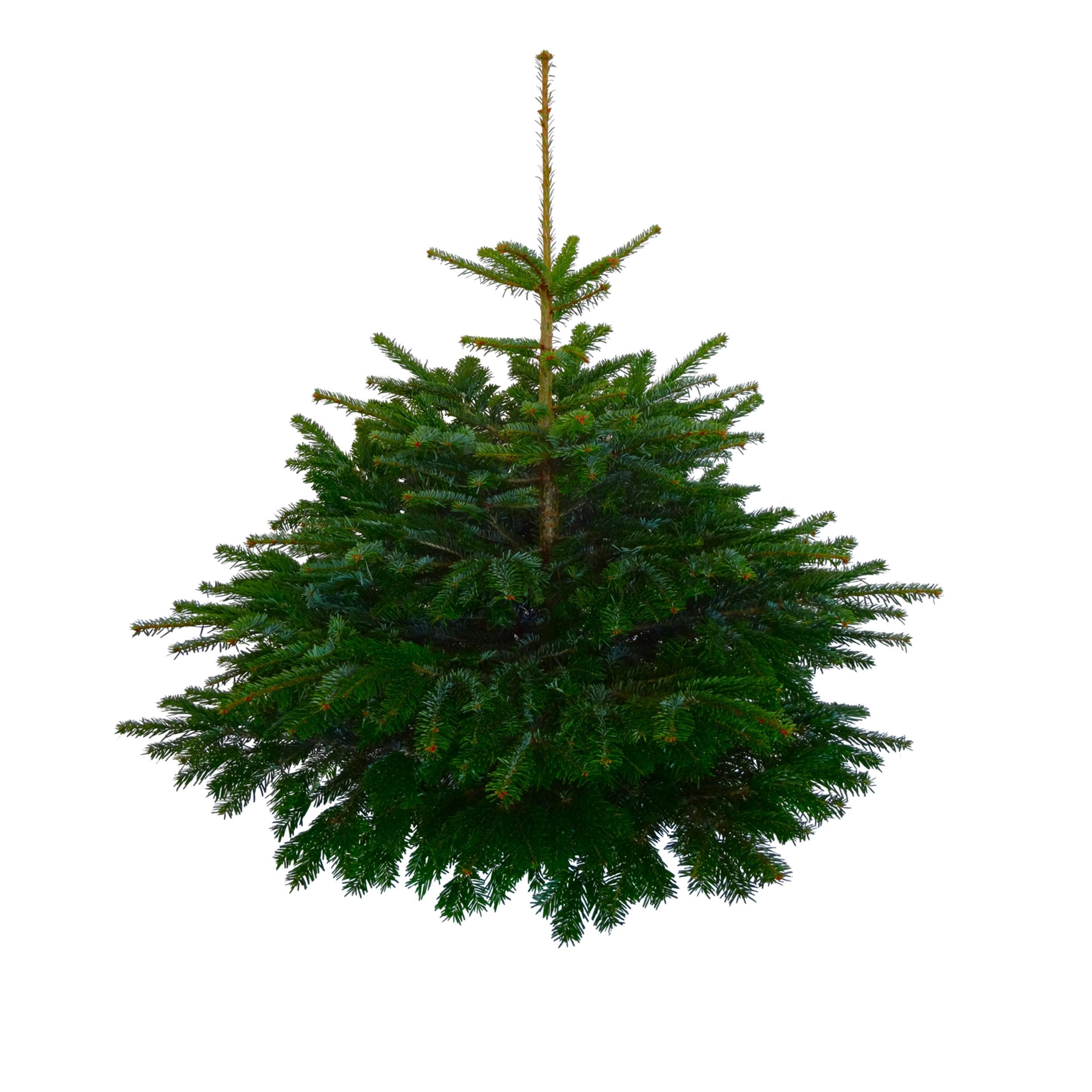 top 28 best 28 weihnachtsbaum echt weihnachtsbaum best. Black Bedroom Furniture Sets. Home Design Ideas