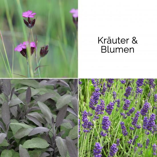 Blumixx Stauden Blumenkasten-Set - Kräuter & Blumen
