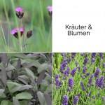 blumixx_stauden_blumenkasten_set_kraeuter_und_blumen_6_pflanzen