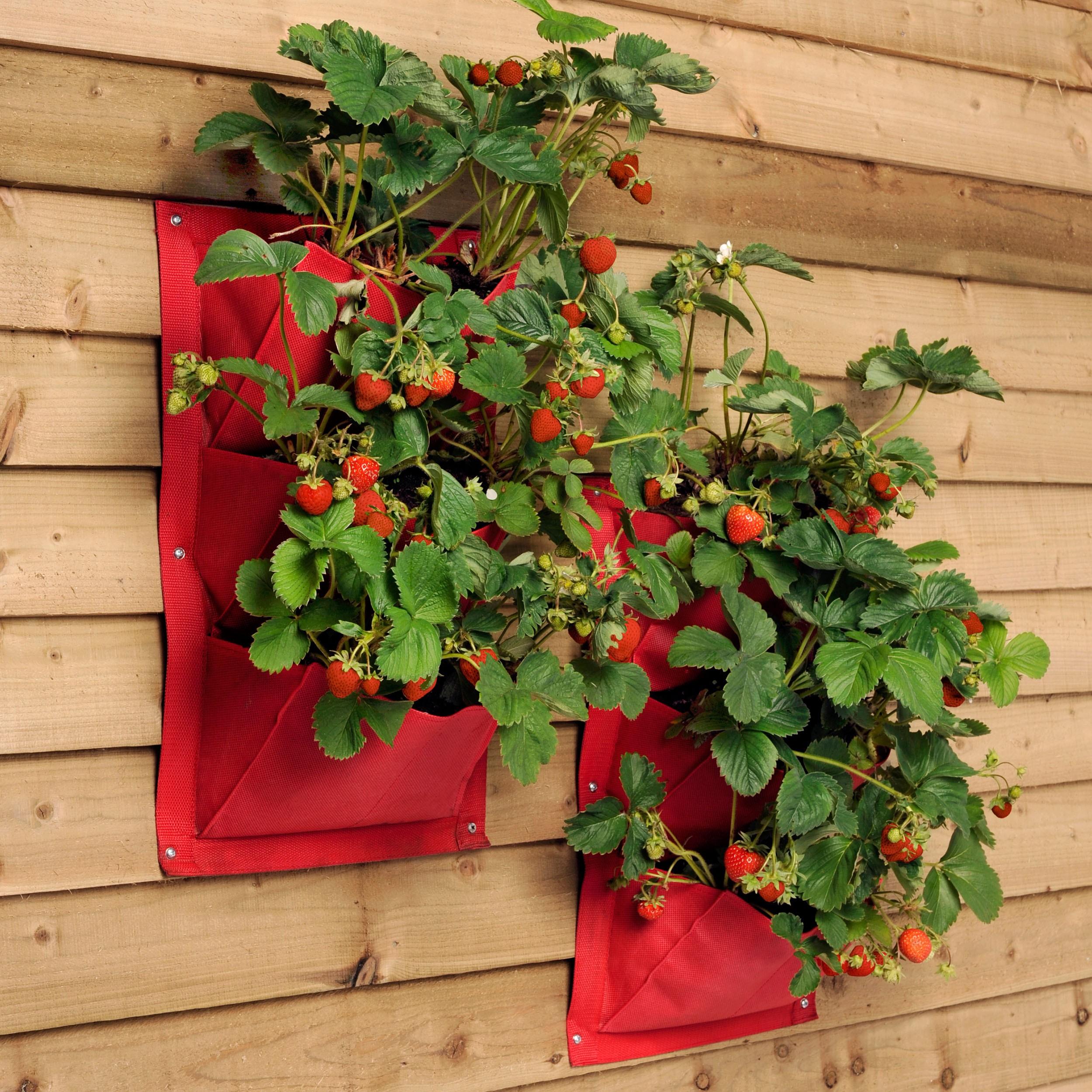 Alluring Vertikaler Garten Anleitung Photo Of Wandtasche-verti-plant-2er-set-burgon-amp-ball-