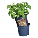 floragard_potato_pot