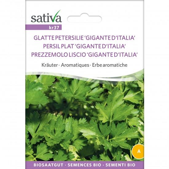 sativa glatte petersilie 1