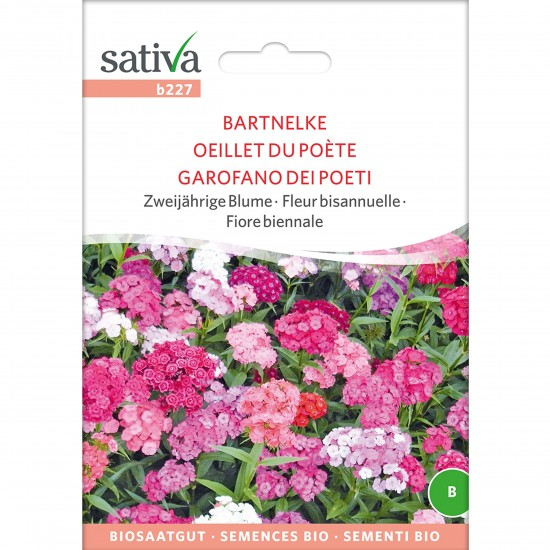 sativa saatgut bartnelke 1
