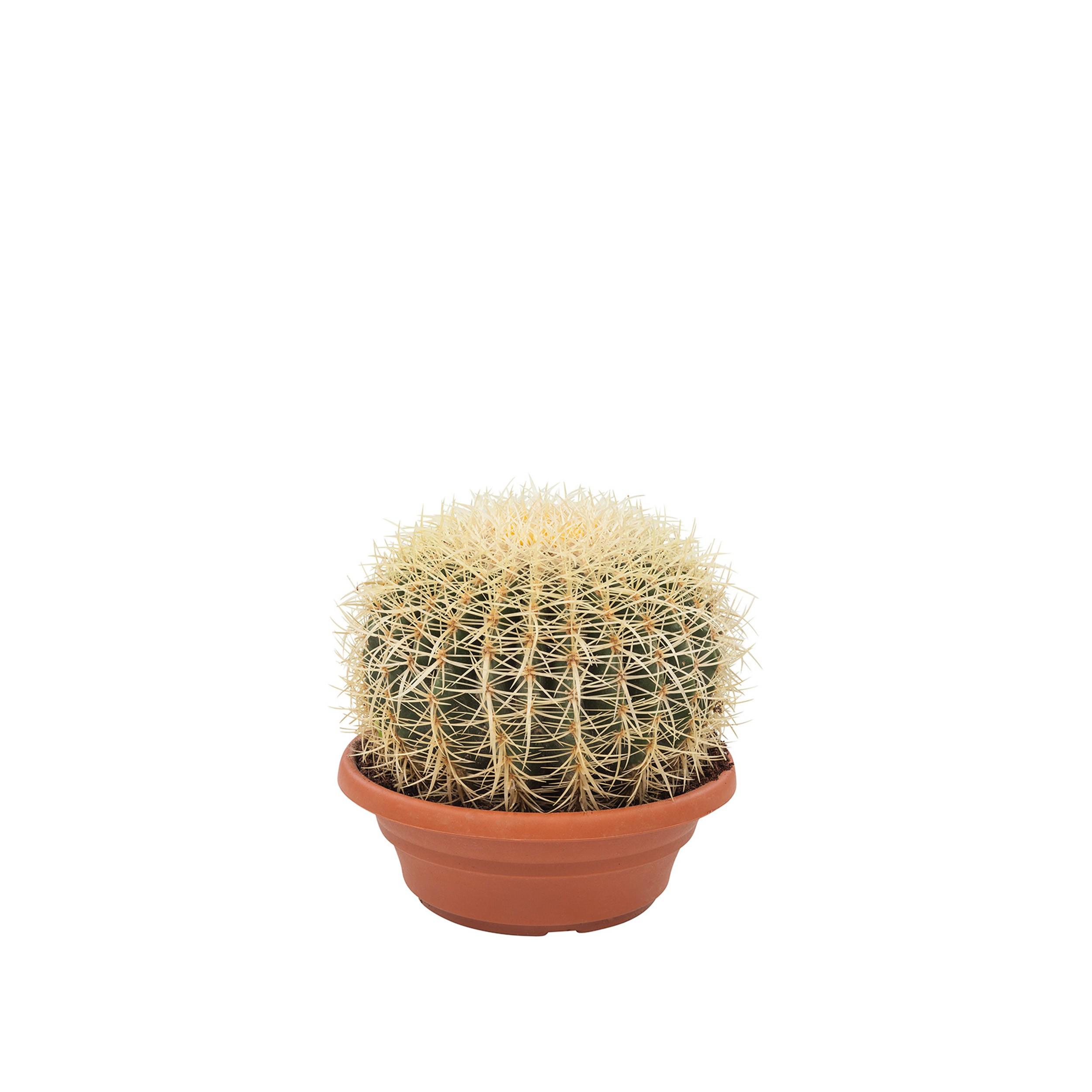 Kunert-Keramik Echinocactus grusonii,Schwiegermutterstuhl,gro/ß+kr/äftig,ca.12cm Durchmesser