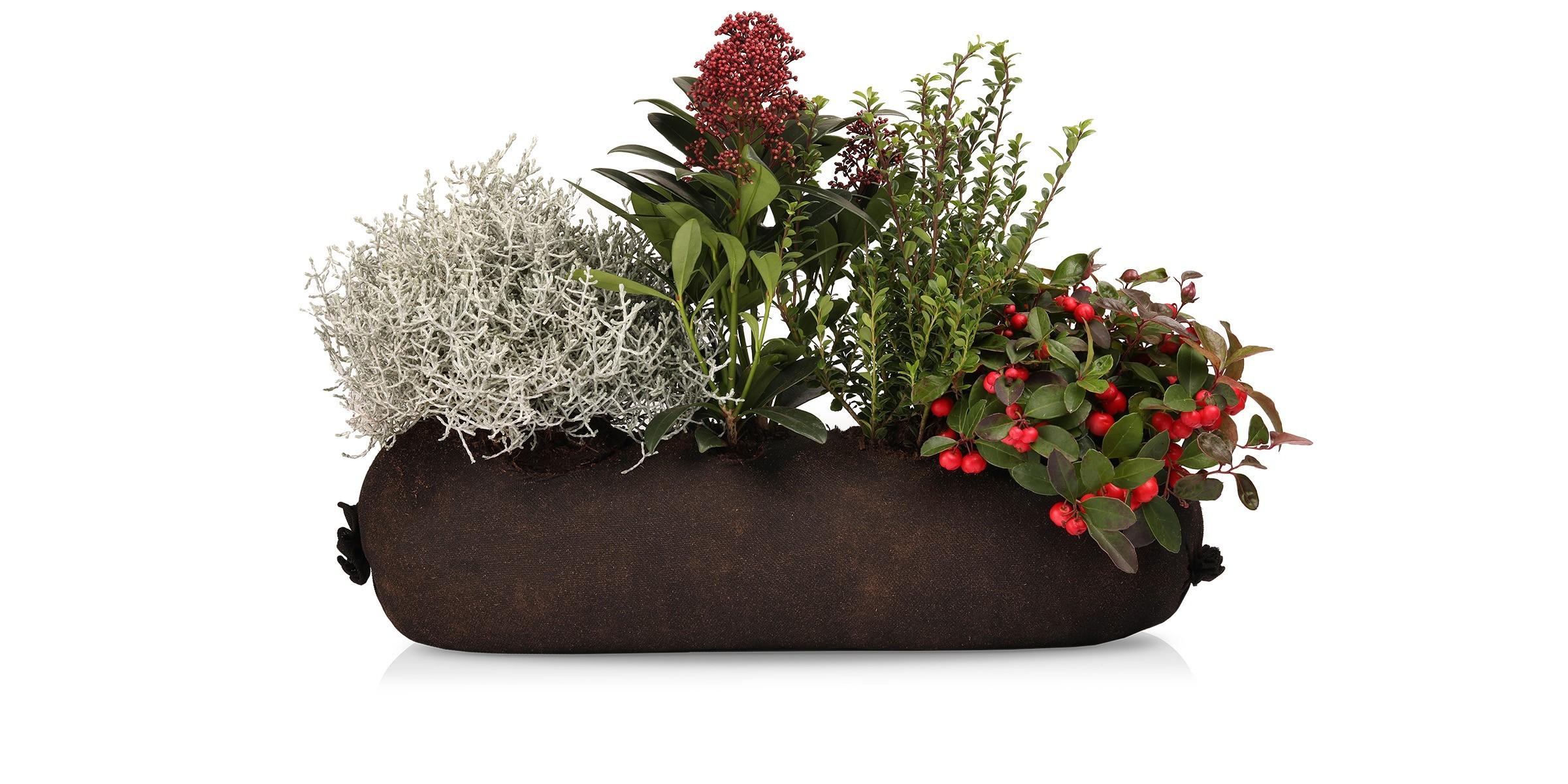 Für den balkon winterpflanzen winterharte Balkonpflanzen