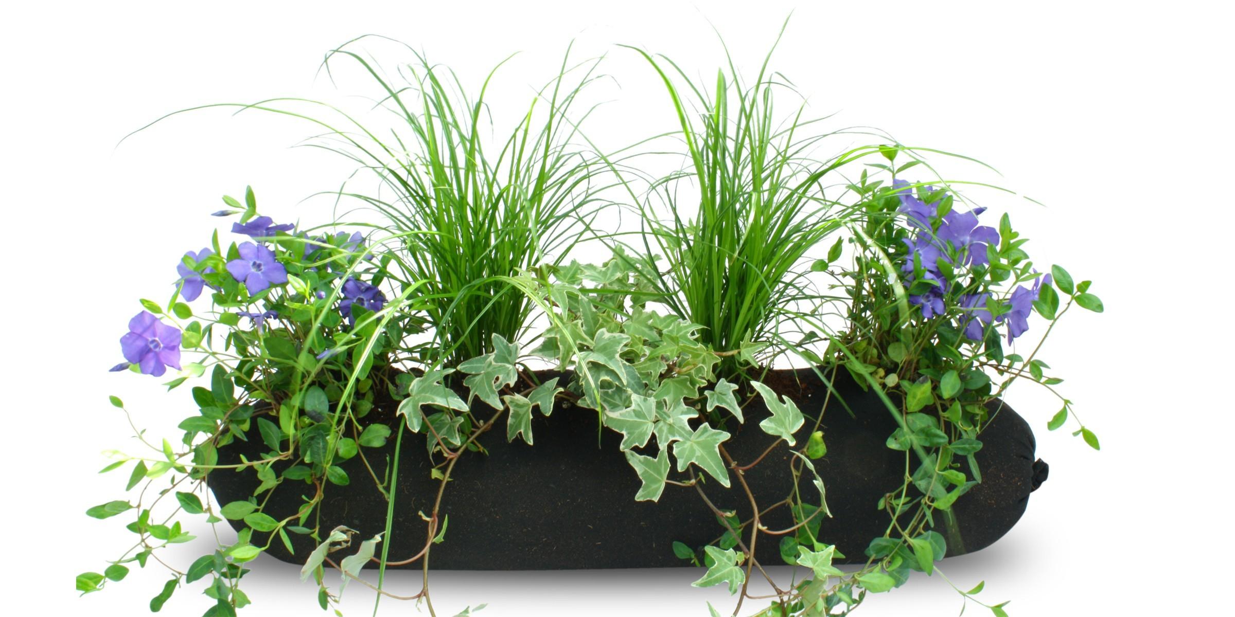 blumixx_bag_immergruen_balkonpflanzen